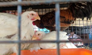Antibiotic use plummets on US farms after ban on using drugs