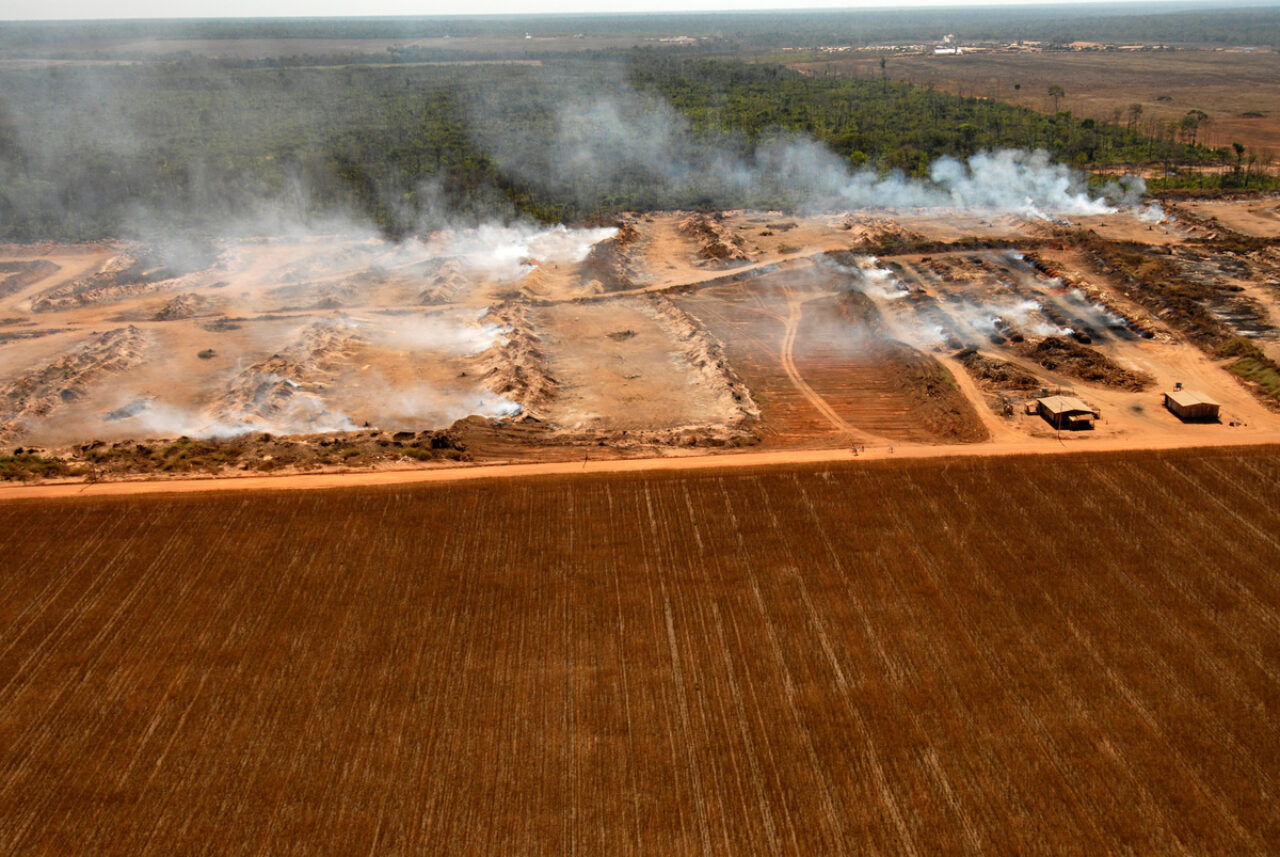Fire on a soya plantation in the Amazon
