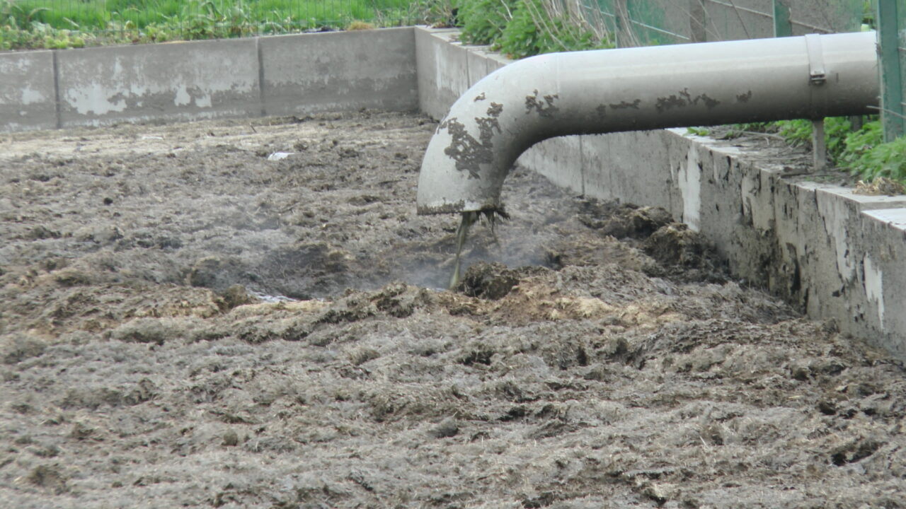 A large grey pipe deposits brown liquid into a steaming pit of mostly solid brown slurry